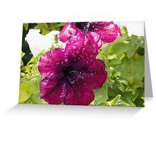 Watered petunias Greeting Card