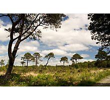 Spiny Trees Photographic Print