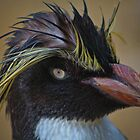 Rockhopper portrait by jdmphotography