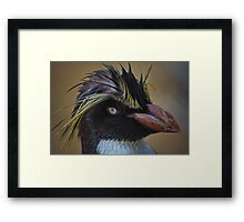 Rockhopper portrait Framed Print