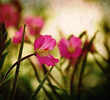 Textured Bokeh by AngelaFoster