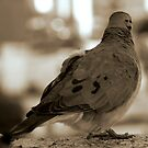 """""""... Oh that I had wings like a dove! for then would I fly away, and be at rest."""" PSalm 55: 6 by Denis Marsili"""