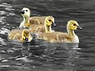 Am I a Swan Yet??? by Sally Green