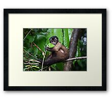 Cute Capuchin Framed Print