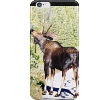 Bull Moose Munching in The Road iPhone Case/Skin