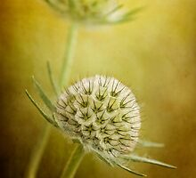 Gone to seed by Mandy Disher