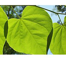 leaf overlap Photographic Print