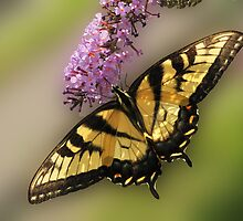 Nectar Lover by Corinne Noon