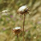Milk Thistle by MariaVikerkaar