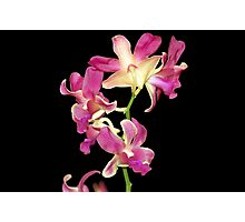 Quezon Memorial Circle orchids 37 Photographic Print
