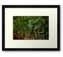 Quezon Memorial Circle plants 38 Framed Print
