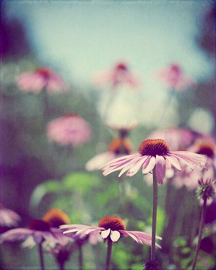 Pastel Pink by ameliakayphotog