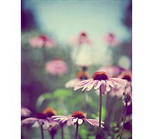 Pastel Pink Photographic Print