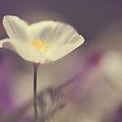 White Bloom by ameliakayphotog