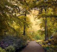 The Golden Walkway by Jessica Jenney