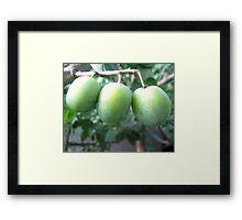 3 plums Framed Print