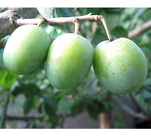 3 plums Photographic Print