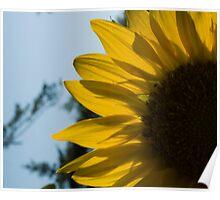 Blue sky Sunflower Poster