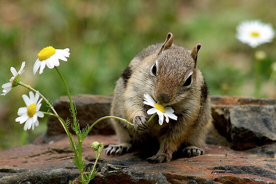 Aww... Chippy Again by Betsy  Seeton