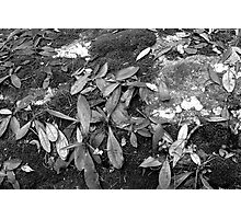 Cemetary Leaves Photographic Print