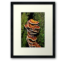"""Tree Fungus"" Framed Print"