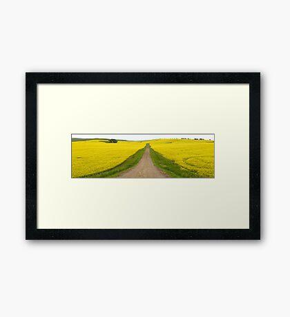 Canola fields Framed Print