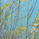 Reeds in the Wind by Harry Oldmeadow