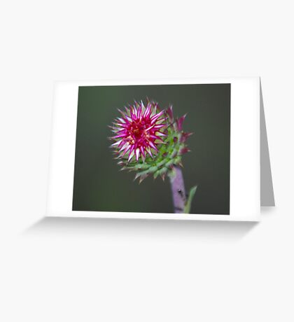 Pink Spike Greeting Card