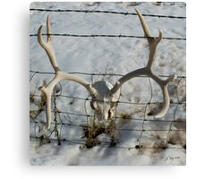 In The Fence      #3610 Canvas Print