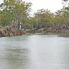 River Gums  by Harry Oldmeadow