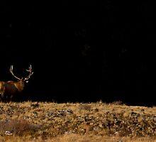 Bull Elk    #0266 by JL Woody Wooden