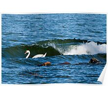 Swan's surf tube Poster