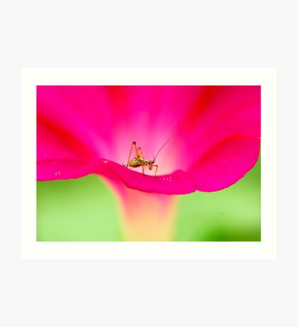 attracting by pink Art Print