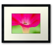 attracting by pink Framed Print
