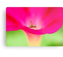 attracting by pink Metal Print