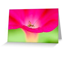 attracting by pink Greeting Card