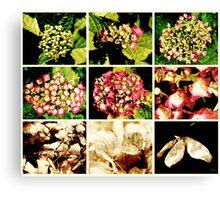 Seasons of a Hydrangea Canvas Print