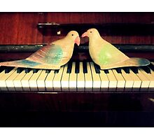 pigeons playing Photographic Print