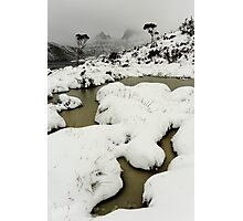 blizzard... Photographic Print