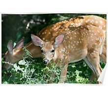 Twin Fawns Poster