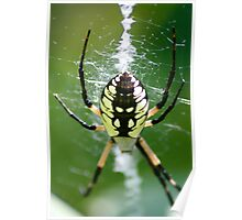 Black & Yellow  Garden Spider Poster