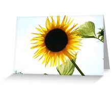 Total Eclipse of the Sun Greeting Card