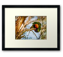 Wrapped Around Framed Print