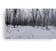 Into Narnia Canvas Print