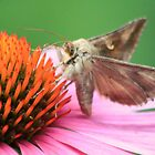 Moth  by DutchLumix