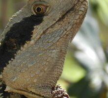 Lizard watching by Maxime2
