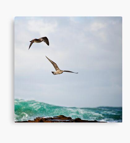 Bellambi  Point - Wingman Canvas Print
