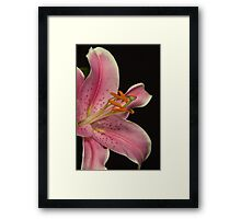 Pink lilly - very close up Framed Print