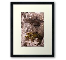 Moss and Lichen Framed Print
