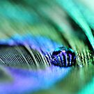 Peacock Feather and a Water Drop by ameliakayphotog